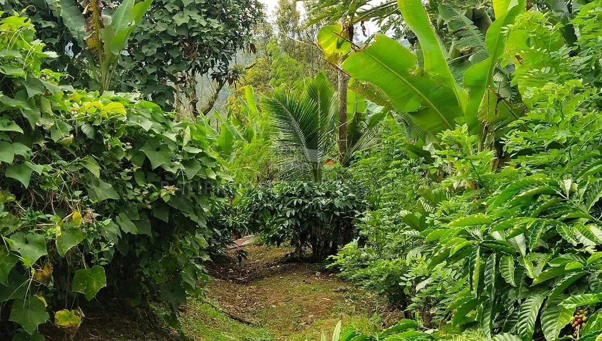Buleleng-Bali-land-for-sale-FH-0047-b