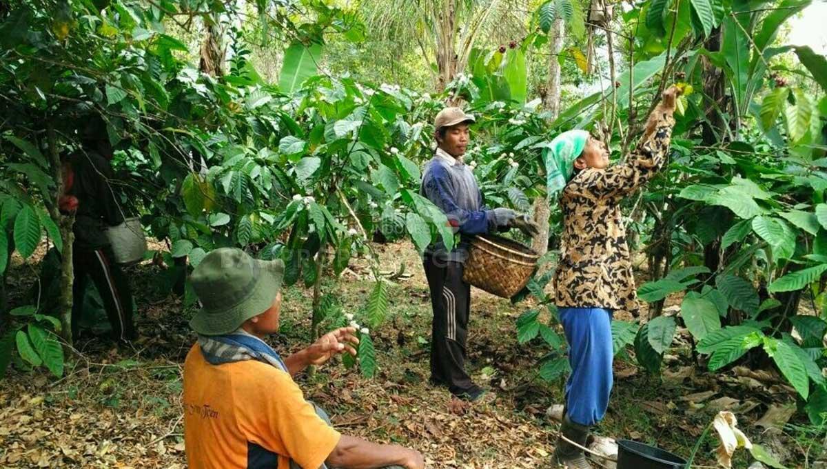 Buleleng-Bali-land-for-sale-FH-0047-g