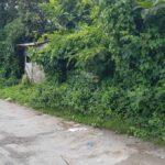 Pererenan-Bali-land-for-sale-FH-0044-c