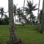 Terrain à vendre à Tabanan Bali-FH-0045-g