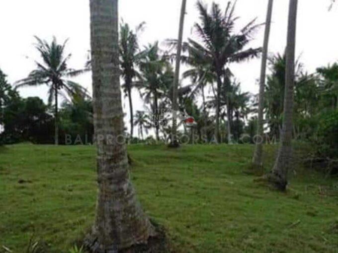 Tabanan-Bali-land-for-sale-FH-0045-g