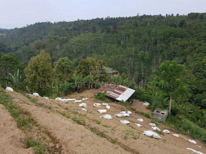 Kintamani-Bali-land-for-sale-FH-0113-d