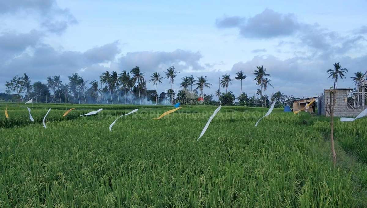 Seseh-Bali-land-for-sale-MWB-6023-a-min