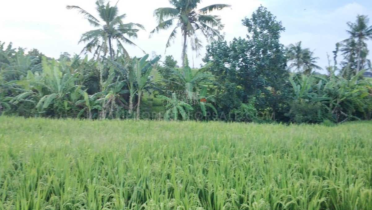 Seseh-Bali-land-for-sale-MWB-6023-b-min