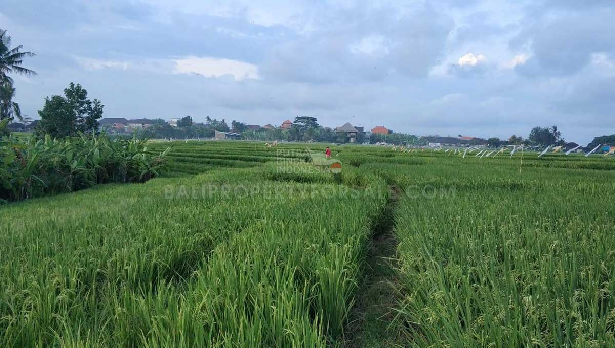 Seseh-Bali-land-for-sale-MWB-6023-d-min