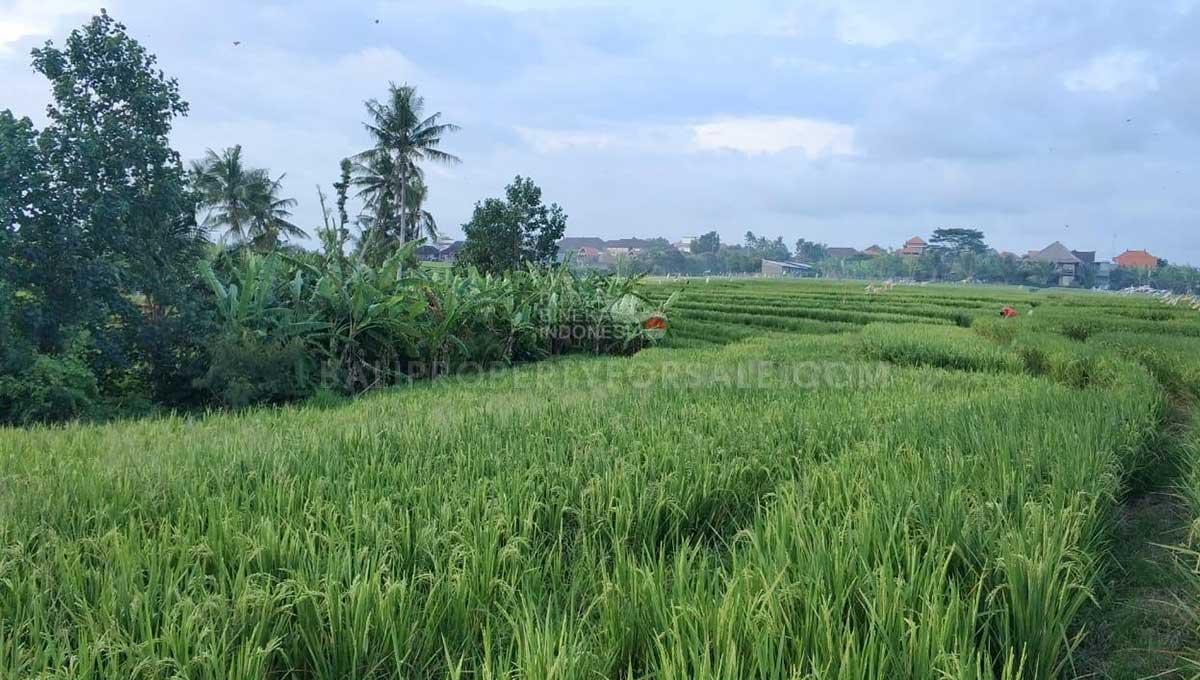 Seseh-Bali-land-for-sale-MWB-6023-e-min