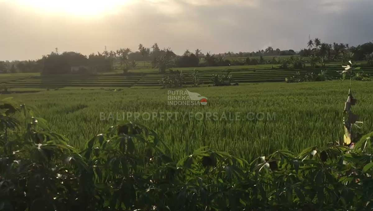 Seseh-Bali-land-for-sale-MWB-6024-a-min