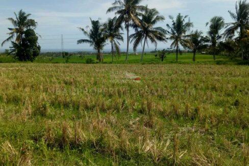 Tabanan-Bali-land-for-sale-FH-0167-h-min