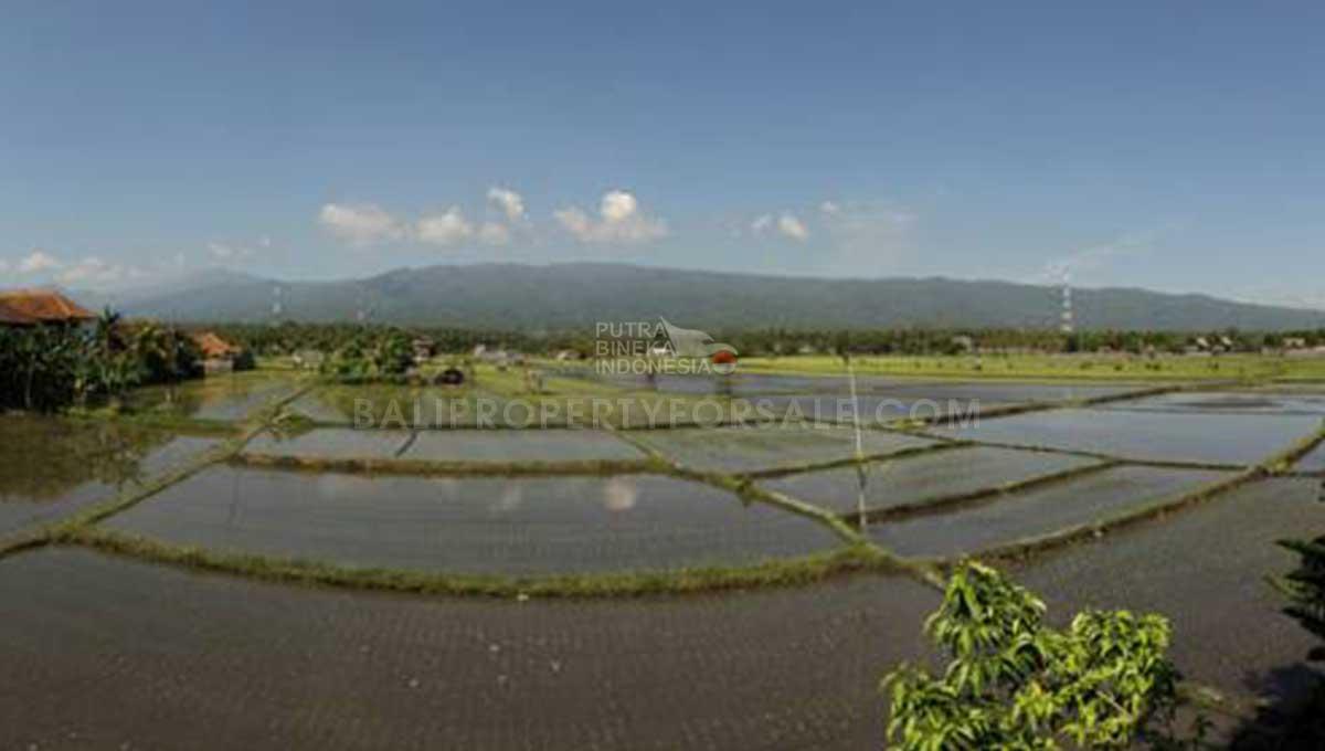 Buleleng-Bali-villa-for-sale---FH-200-h-min