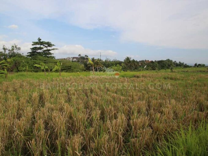 Cemagi-Bali-land-for-sale-FH-0231-b