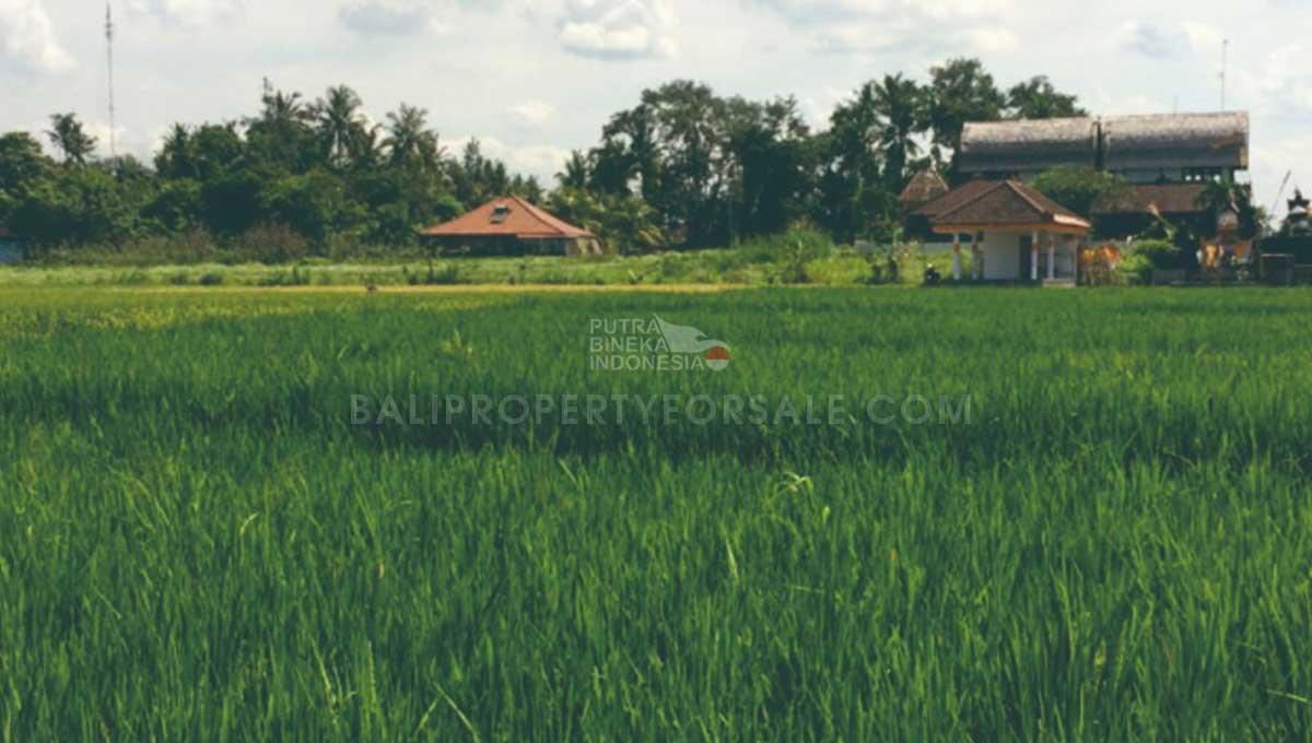 Kedungu-Bali-land-for-sale-LS7003-c-min