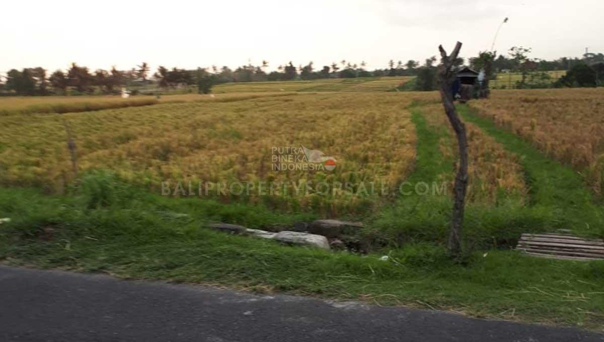 Pererenan-Bali-land-for-sale-FH-0238-a