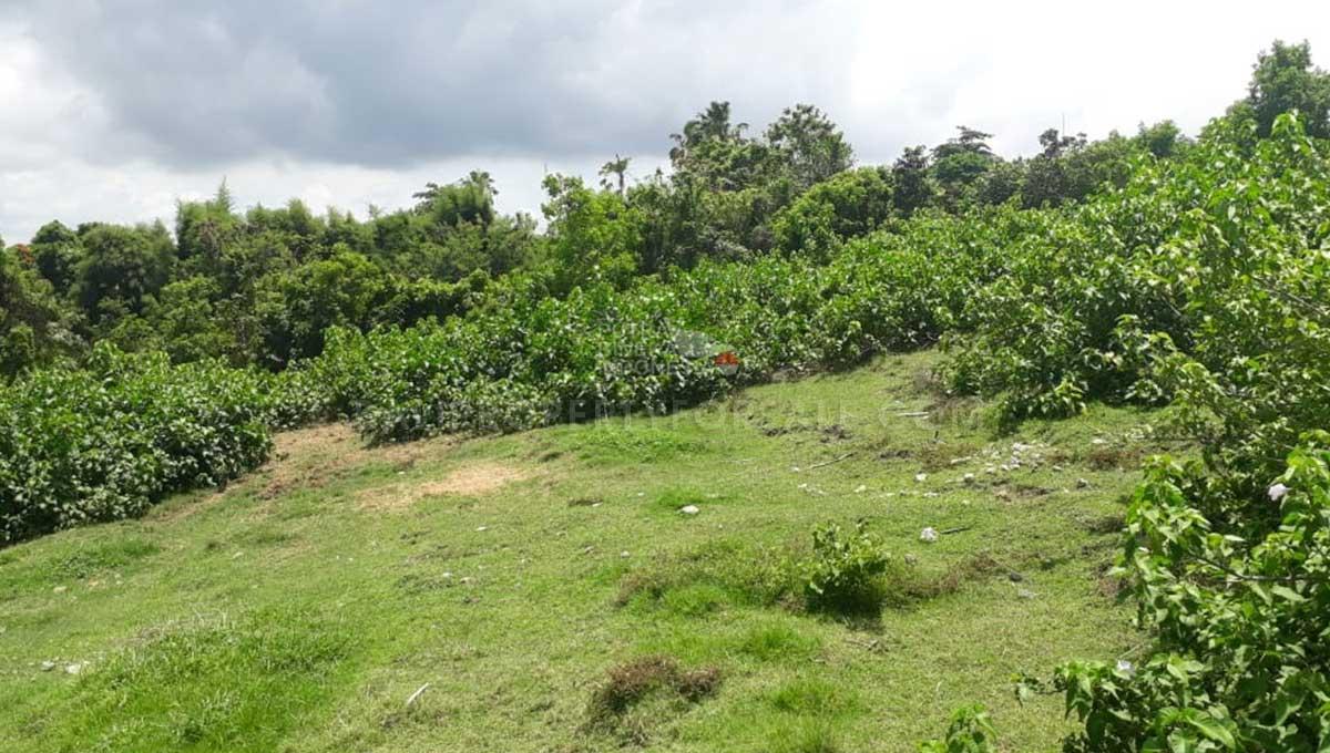 Pererenan-Bali-land-for-sale-FH-0249-h-min