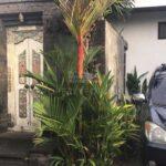 Kerobokan-Bali-villa-for-sale-FH-0319-b-min