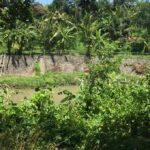 Nyanyi-Bali-land-for-sale-FH-0282-c-min