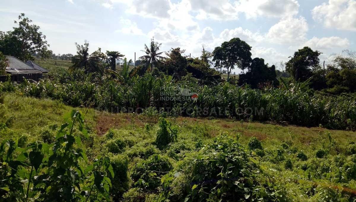 Pererenan-Bali-land-for-sale-FH-0272-e-min