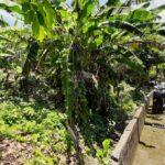 Tabanan-Bali-land-for-sale-FH-0288-a-min
