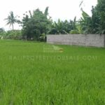 Buduk-Bali-land-for-sale-FH-0374-a-min