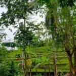 Canggu-Bali-land-for-sale-LS7006-d-min