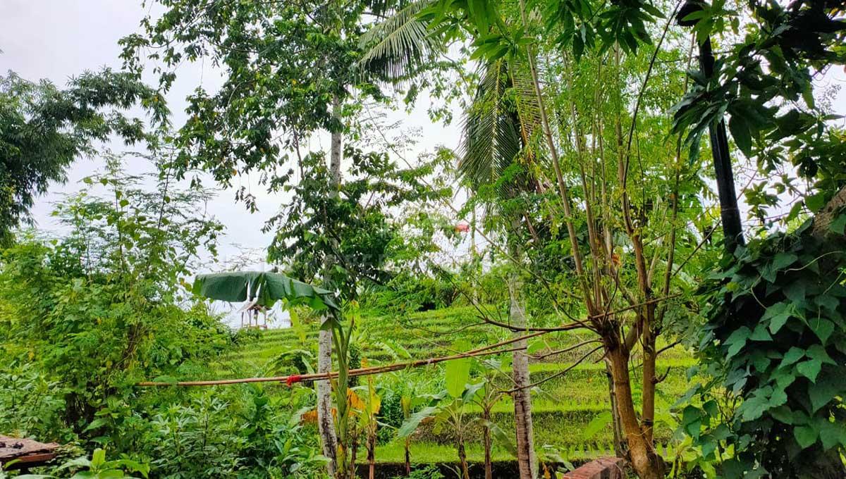 Canggu-Bali-land-for-sale-LS7006-e-min