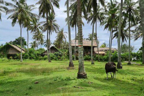 Tabanan-Bali-land-for-sale-FH-0397-f-min