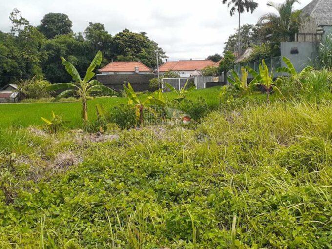 Canggu-Bali-land-for-sale-FH-0581-c-min