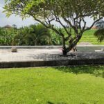 Canggu-Bali-villa-for-sale-FH-0524-c-min