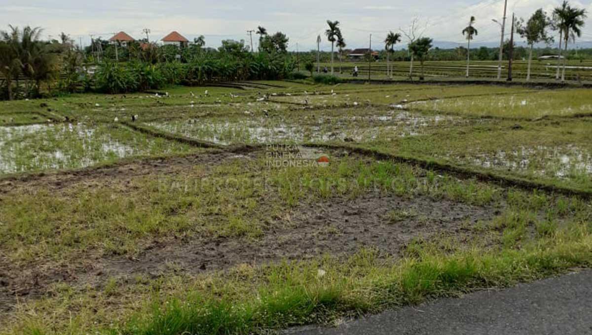 Cemagi-Bali-land-for-sale-FH-0437-b-min