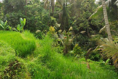 Gianyar-Bali-land-for-sale-FH-0546-c-min