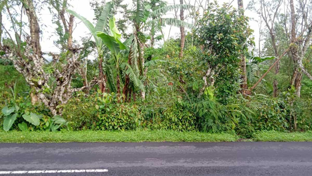 Kintamani-Bali-land-for-sale-FH-0509-b-min