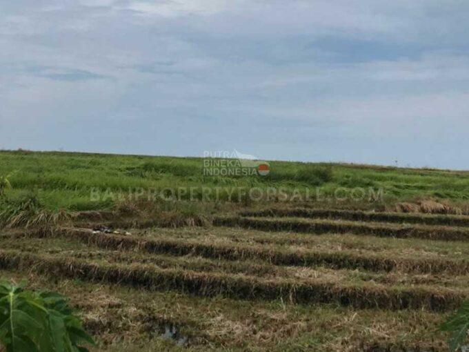 Pererenan-Bali-land-for-sale-FH-0451-i-min