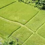 Ubud-Bali-land-for-sale-FH-0445-e-min