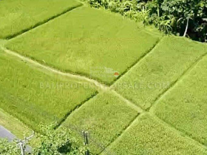 Ubud-Bali-land-for-sale-FH-0445-e-min