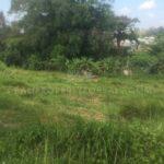 Canggu-Bali-land-for-lease-FH-0663-d-min