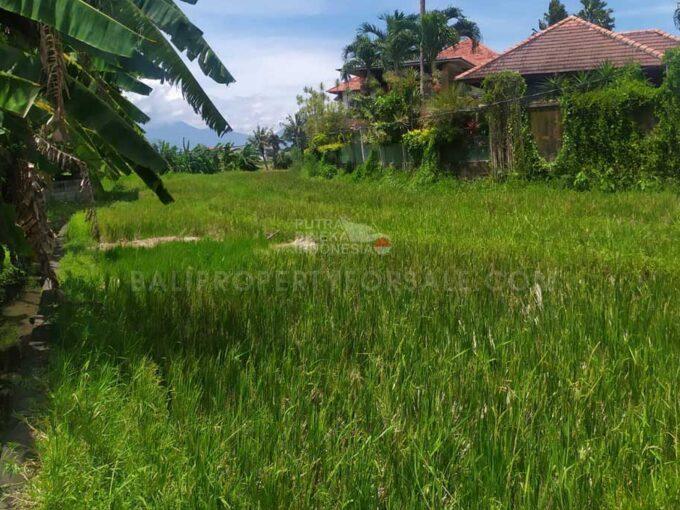 Canggu-Bali-land-for-lease-FH-0691-c-min