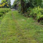 Canggu-Bali-land-for-sale-FH-0615-a-min
