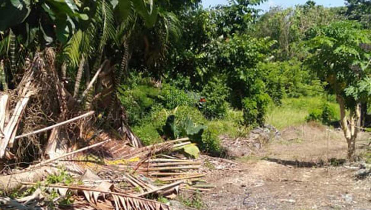 Pererenan-Bali-land-for-sale-FH-0701 a-min
