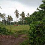 Tabanan-Bali-land-for-sale-FH-0706-d-min