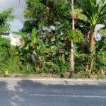 Berawa-Bali-land-for-lease-FH-0727-e-min