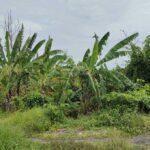 Cemagi-Bali-land-for-sale-FH-0762-e-min