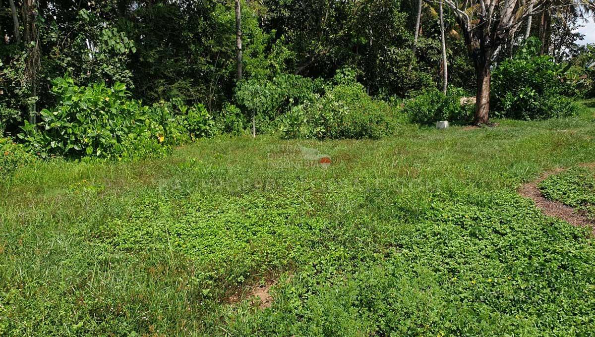 Tabanan-Bali-land-for-sale-FH-0761-c-min