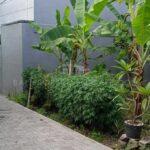 Land-for-sale-Canggu-LS7028-a