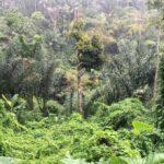 Land-for-sale-Ubud-LS7023-a