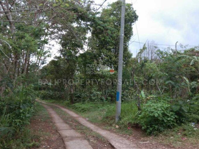 Coffee-Plantation-for-sale-FH-1142-a