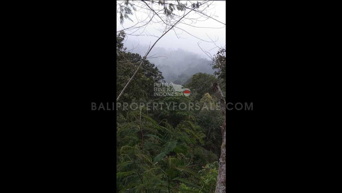 Coffee-Plantation-for-sale-FH-1142-d