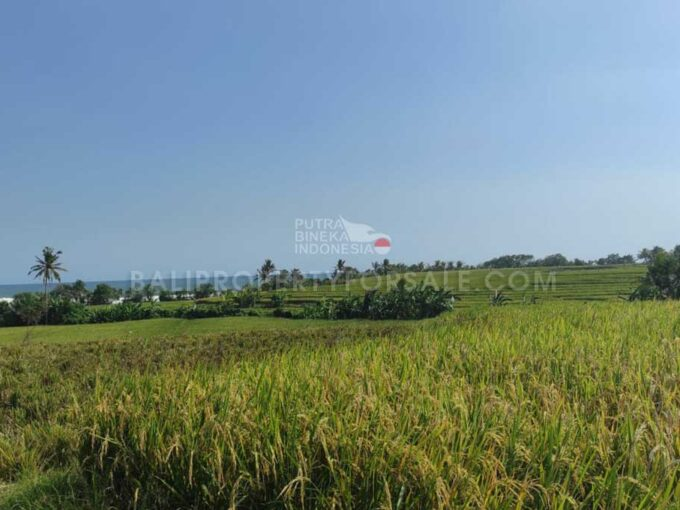 Land-for-sale-Tabanan-FH-1174-f