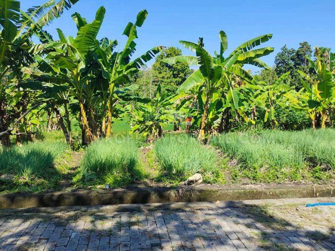 Land-for-sale-Tabanan-FH-1200-b