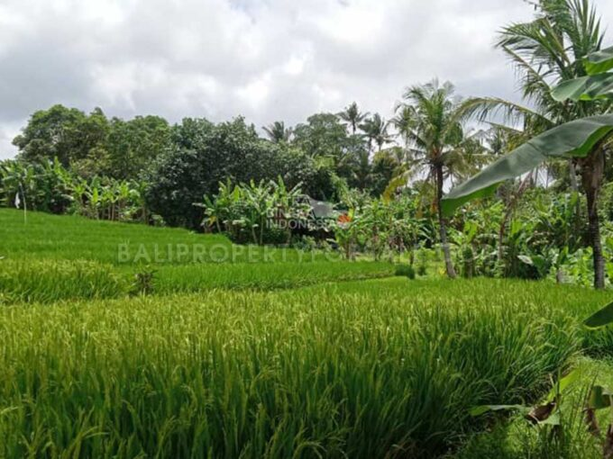 Land-for-sale-Nyanyi-FH-1403-b