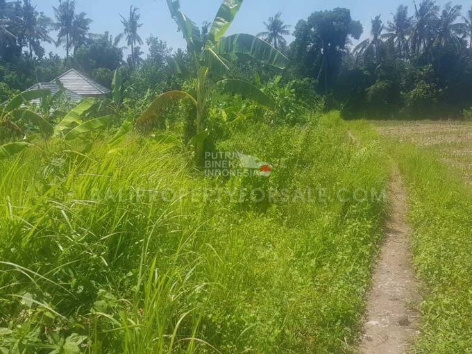 Land-for-sale-Pererenan-FH-1411-a