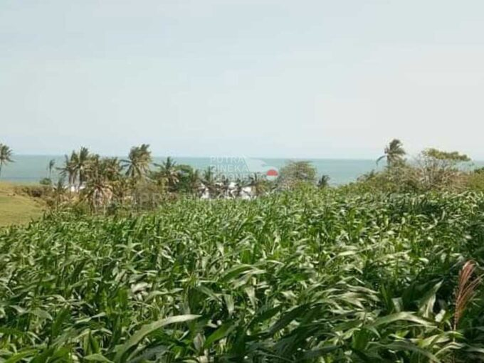 Land-for-sale-Tabanan-FH-1272-a